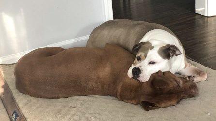 Il cane sistema il letto al fratello che non sta bene