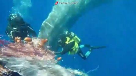 Lipari, sub liberano capodoglio intrappolato nelle reti da pesca