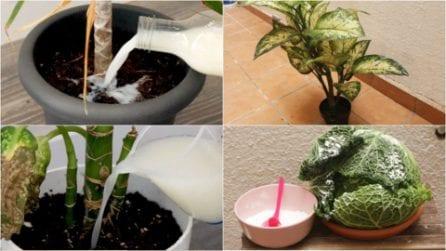 Come mantenere le tue piante belle e in salute usando dei comuni alimenti presenti in cucina!