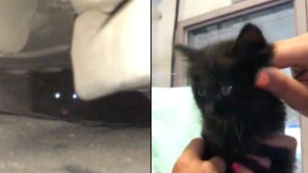 Sentono dei rumori sotto l'auto e scoprono che è un gattino: fanno di tutto per salvarlo