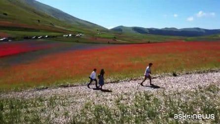 In volo sull'arcobaleno: la fioritura delle lenticchie in Umbria