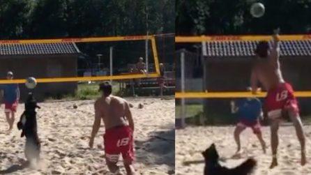 La strana coppia: il ragazzo gioca col suo cane a beach volley e segnano un bellissimo punto