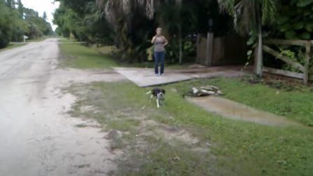 Torna dopo aver lavorato lontano da casa per 2 anni: la reazione del cane quando lo rivede è bellissima