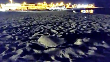 Tartaruga marina deposita le uova durante un party in spiaggia: scena emozionante in Salento