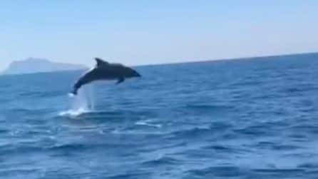 Napoli, i delfini saltano nel Golfo a pochi metri dalla barca: la danza è uno spettacolo
