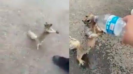 """Uno scoiattolo assestato ferma un passante: """"Posso avere un po' d'acqua?"""""""