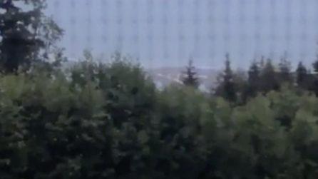 Alaska, violento terremoto suonano le sirene di allerta tsunami: in corso l'evacuazione