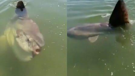 Venezia, vedono una pinna uscire dall'acqua e fanno un video: insolito visitatore in laguna