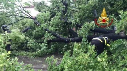 Maltempo Imola, allagamenti e alberi caduti: diversi interventi dei Vigili del Fuoco