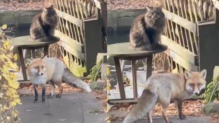 Il gatto e la volpe esistono anche nella realtà e sono inseparabili