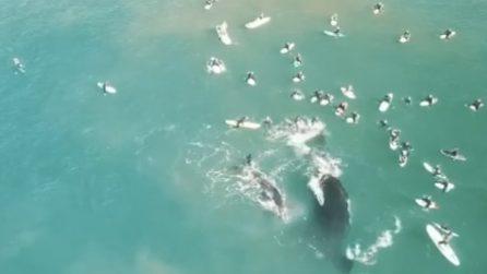 Si avvicinano troppo al suo cucciolo: la balena allontana i surfisti con la coda