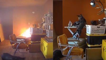 """In casa scoppia un incendio, il filmato di videosorveglianza """"incastra"""" il cane"""