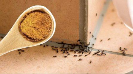 Come utilizzare la cannella in giardino