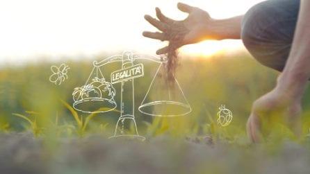 Una buona spesa può cambiare il mondo - La legalità nelle filiere alimentari Coop