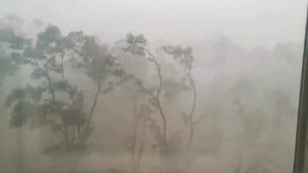Impressionante temporale a Ferrara: gli alberi cadono come birilli