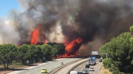 Fiamme altissime bruciano in pochi minuti centinaia di alberi: le immagini fanno paura
