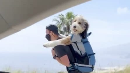 La passeggiata sui pattini con il cane: la gita di due amici inseparabili