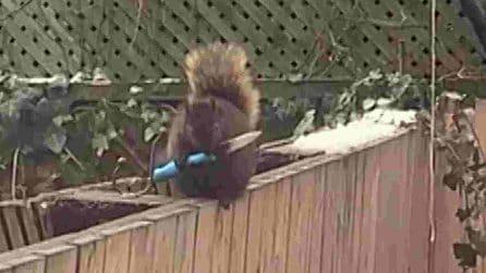 """Lo scoiattolo """"horror"""", che prova a """"intimidire"""" le persone impugnando un coltello"""