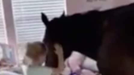 La bambina ama così tanto il cavallo che la intrufola nella sua stanza