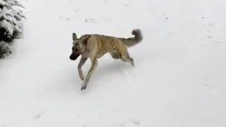 La reazione del cane che vede per la prima volta in vita sua la neve