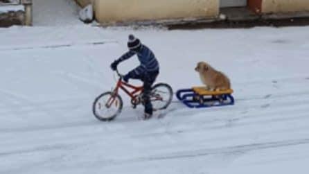 La tenera amicizia tra un ragazzino e il cane sulla slitta: lo traina con la bici