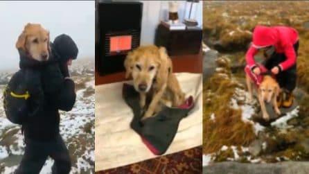 Cagnolina paralizzata dal freddo: due medici la trovano dispersa in montagna e la salvano