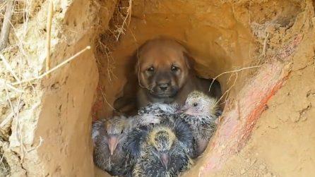 Un cagnolino e tre uccellini rintanati in una grotta: si confortano a vicenda