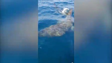 """""""Sto pure da solo"""", pescatore """"circondato"""" da uno squalo enorme"""