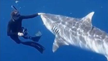 Se uno squalo tigre ti si avvicina, ecco come devi comportati (per tenerlo buono)