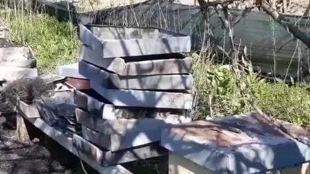 L'allevamento di api distrutto da un incendio doloso a Trentola Ducenta