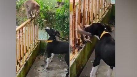 Una scimmietta si arrampica su un balcone dove c'è un cane: la scena diventa tenerissima