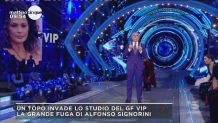 Un topo al GF Vip, lo scherzo ad Alfonso Signorini