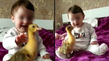 La bimba accarezza il pulcino ed è felice: le immagini sciolgono il cuore