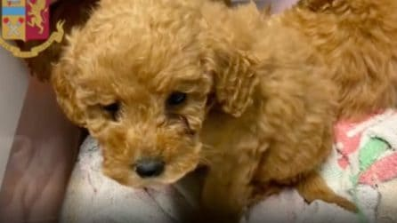 Traffico illecito di cuccioli: ecco i cagnolini salvati a Villesse