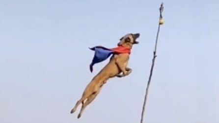 Super Dog, il cane col mantello che sembra volare