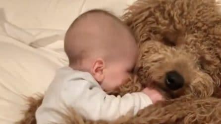 Il bambino e il cane dormono abbracciati: una tenerezza infinita