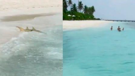La squalo attacca a riva, la sua velocità è impressionante