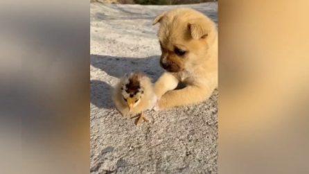 """""""Voglio giocare con te"""". I due amici cuccioli più dolci che ci siano"""