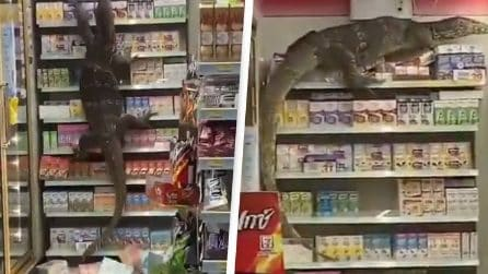 Enorme lucertola si arrampica sugli scaffali: una scena spaventosa al supermercato