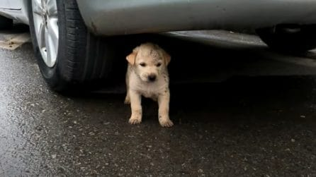 Cucciolo impaurito è stato abbandonato: questi ragazzi fanno di tutto per salvarlo