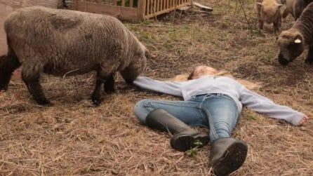 Finge un malore davanti alla pecora: la sua reazione è dolcissima