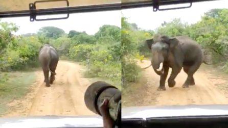 Seguono l'elefante per fargli delle foto: l'animale si infuria e si scaglia contro i turisti
