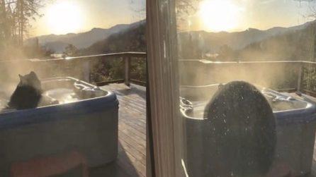 Un orso si rilassa nella jacuzzi, la sorpresa sul balcone