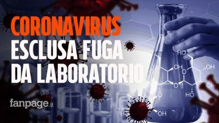 Coronavirus, esclusa la fuga da un laboratorio di Wuhan: le conclusioni dell'Oms