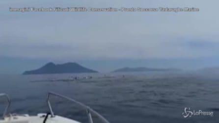 Filicudi, un branco di delfini al largo delle Eolie incanta il web