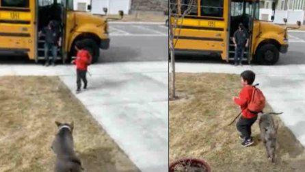 Pit Bull ringrazia l'autista dello scuolabus ogni giorno per aver portato a casa il suo padroncino