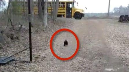 Il gallo che aspetta il ritorno da scuola della sua padroncina