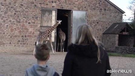 In Inghilterra riapre lo zoo: si presentano in più di 5mila