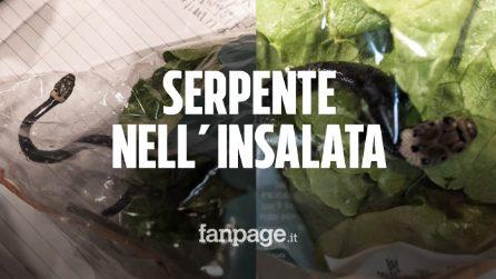 Comprano una busta di insalata al supermercato, all'interno era nascosto un serpente velenoso