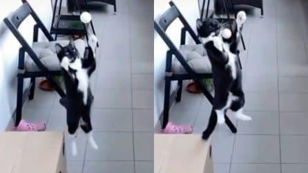 Stop di petto del gatto, le immagini sono impressionanti